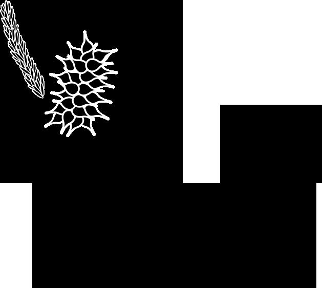 Herbarium Thumbnail