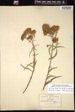 Image of Brickellia pulcherrima