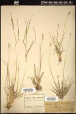 Image of Danthonia decumbens