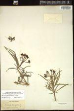 Image of Euphorbia scutiformis
