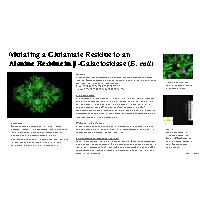 Thumbnail for Mutating a Glutamate …
